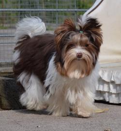 Chiens yorkshire terrier f19c9d05 322e 9e04 e10c 82bd552a3fd1raymond